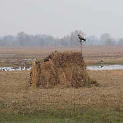 Купить маскировочную сеть для охоты на гусей и уток